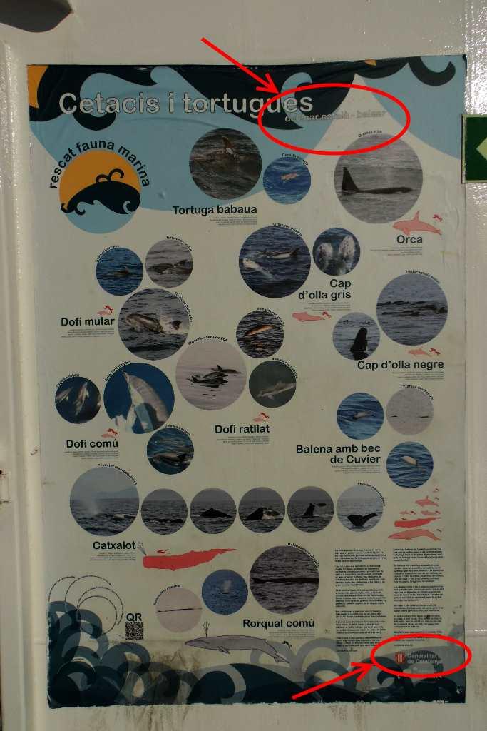 Cartel de cetacis i tortugues